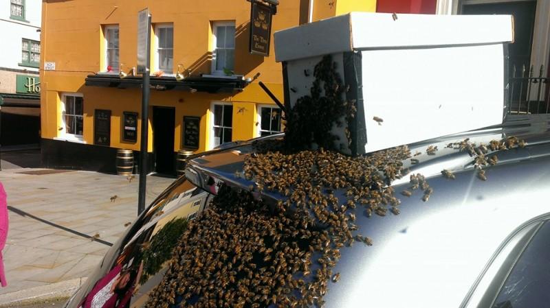 Durante dos dias este enjambre de abejas estuvo atacando su coche 03