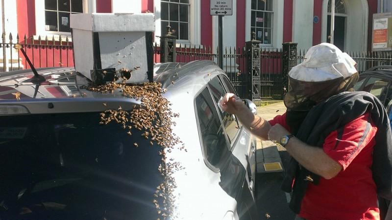Durante dos dias este enjambre de abejas estuvo atacando su coche 04