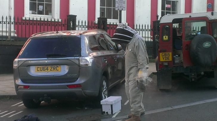 Durante dos dias este enjambre de abejas estuvo atacando su coche 05