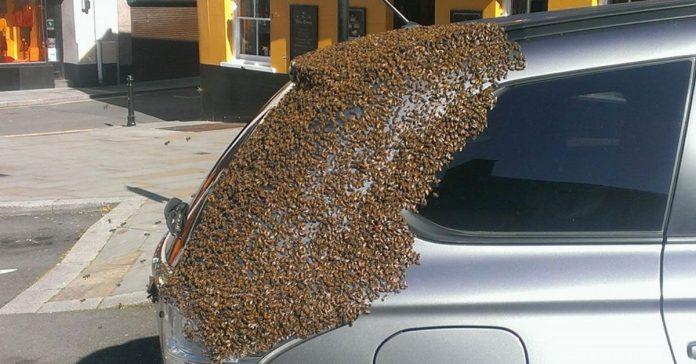 Durante dos dias este enjambre de abejas estuvo atacando su coche banner