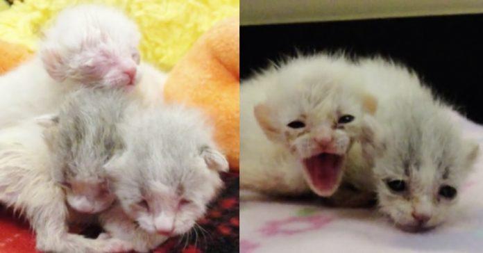 Encontraron unos gatitos abandonados en la basura cuando se acercaron a ellos se dieron cuenta de algo increible banner