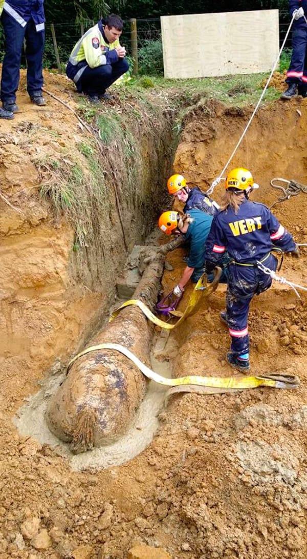 Equipo de rescate logra salvar a un caballo al borde de la muerte