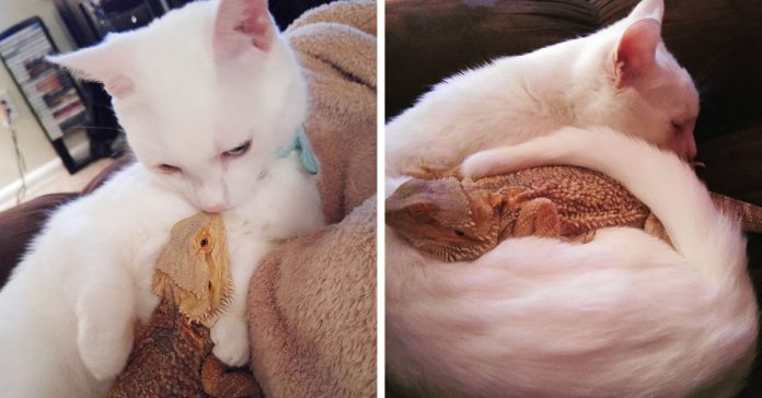 Este curioso Gato se volvio el mejor amigo de un increible Dragon banner