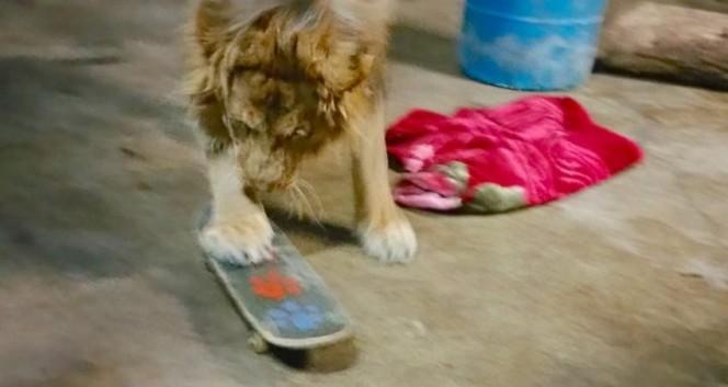 Este leon rescatado se niega a ir a ninguna parte sin su mantita 07
