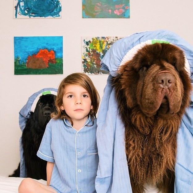 Estos gigantescos perros y sus pequeños amigos son completamente adorables