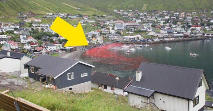 La caza anual de la ballena en las Islas Faroe banner