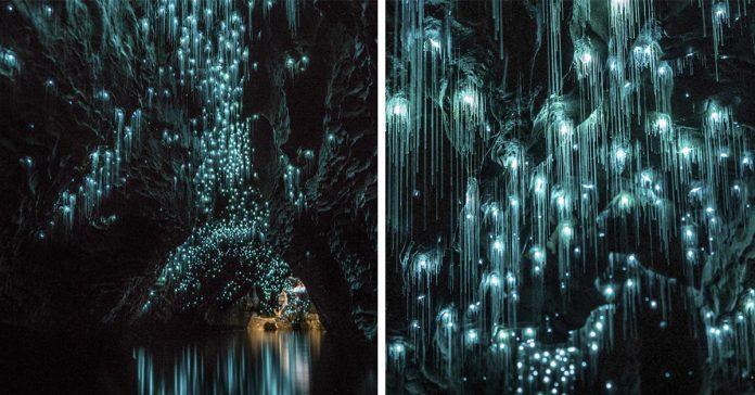 Las luciernagas convierten las cuevas banner