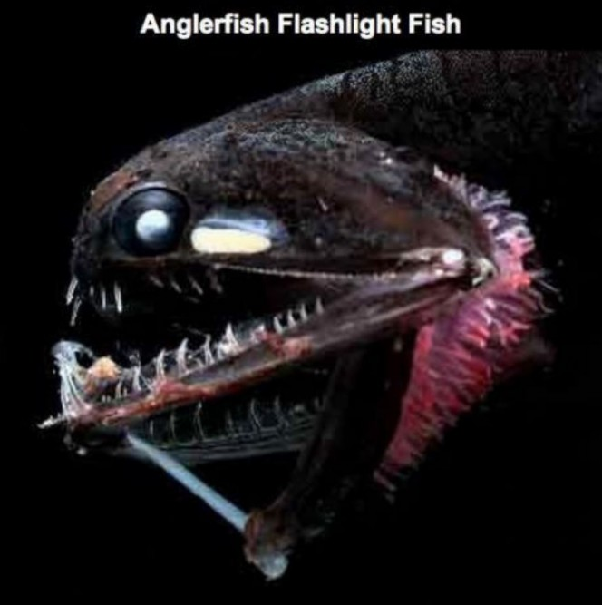 Lo que una camara acuatica capturo en el oceano 02