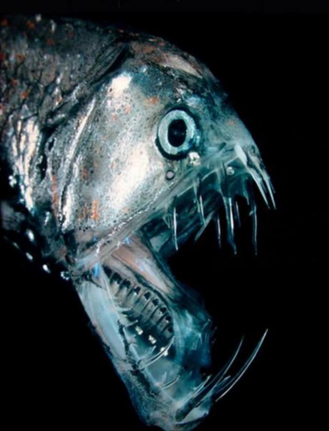 Lo que una camara acuatica capturo en el oceano 04
