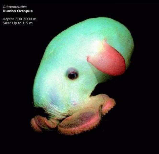 Lo que una camara acuatica capturo en el oceano 05
