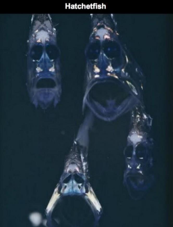 Lo que una camara acuatica capturo en el oceano 08