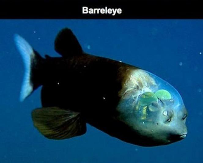 Lo que una camara acuatica capturo en el oceano 09