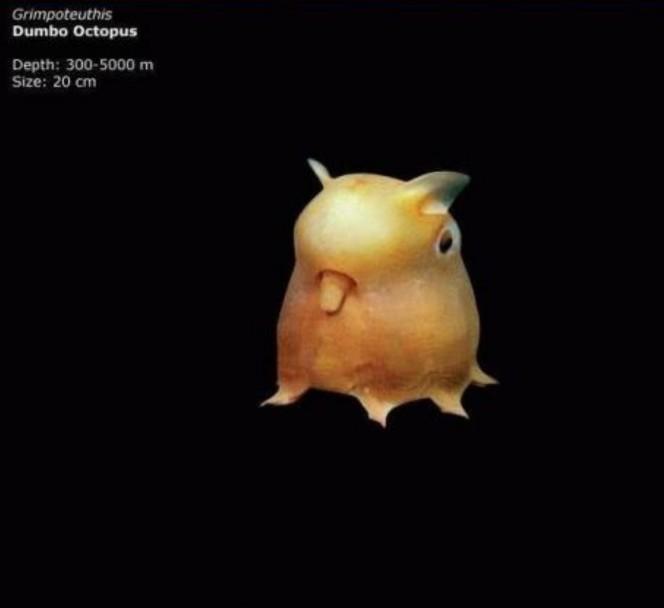 Lo que una camara acuatica capturo en el oceano 10