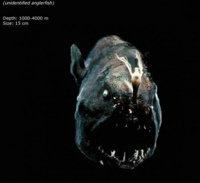 Lo que una camara acuatica capturo en el oceano 12
