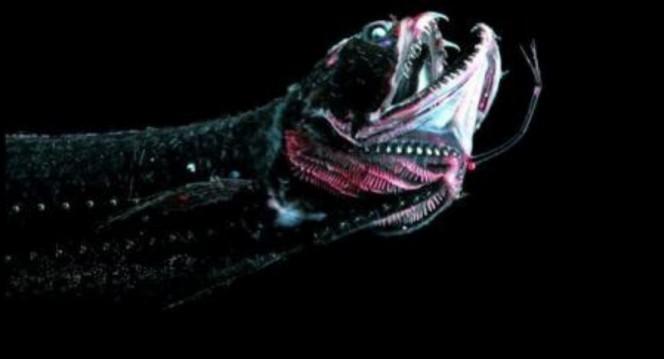 Lo que una camara acuatica capturo en el oceano 16