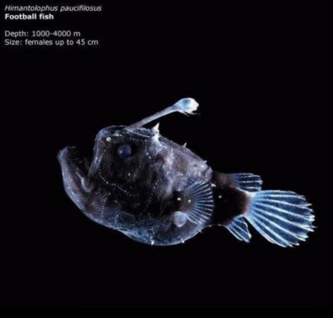 Lo que una camara acuatica capturo en el oceano 18