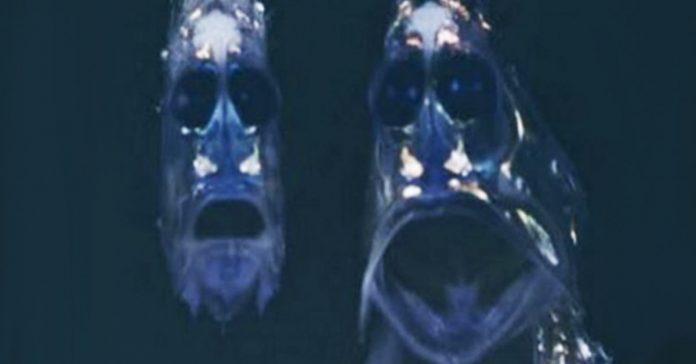 Lo que una camara acuatica capturo en el oceano banner