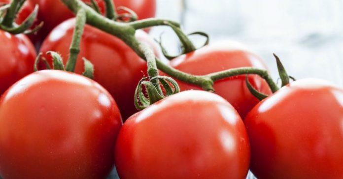 Quieres que tus tomates se mantengan frescos banner