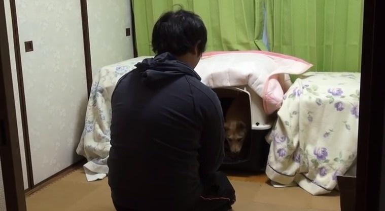 Salvaron a este cachorrito porque la perrera estaba demasiado ocupada 02