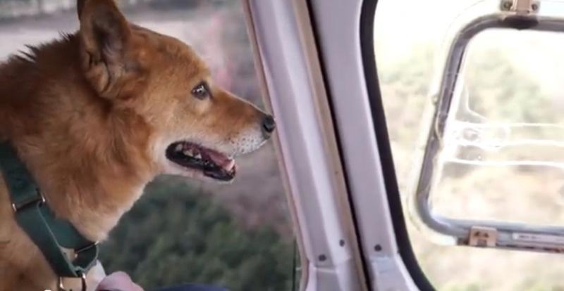 Salvaron a este cachorrito porque la perrera estaba demasiado ocupada 03