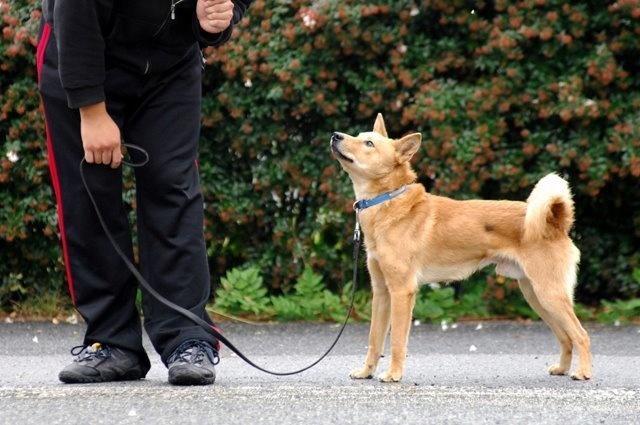 Salvaron a este cachorrito porque la perrera estaba demasiado ocupada 04