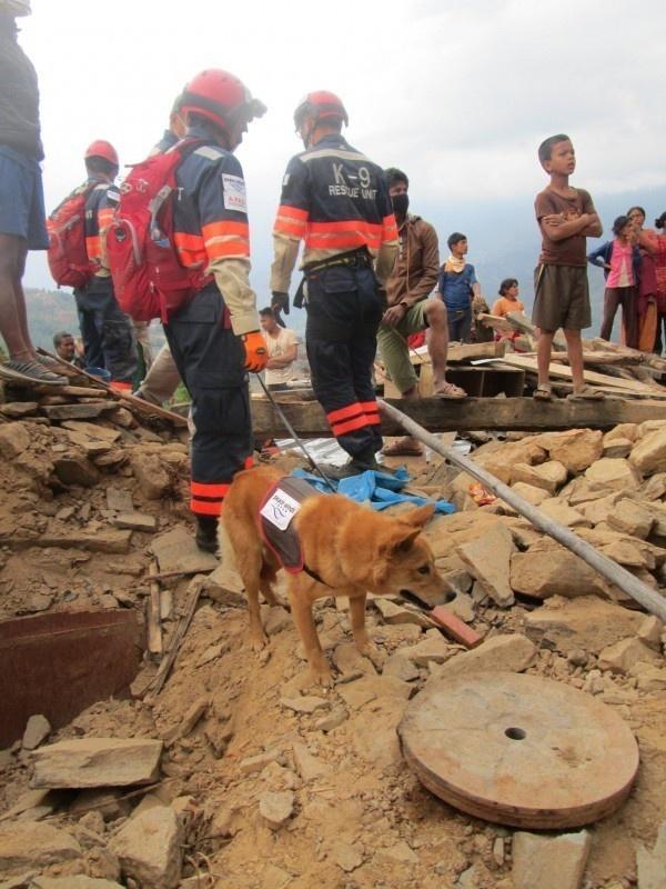 Salvaron a este cachorrito porque la perrera estaba demasiado ocupada 06