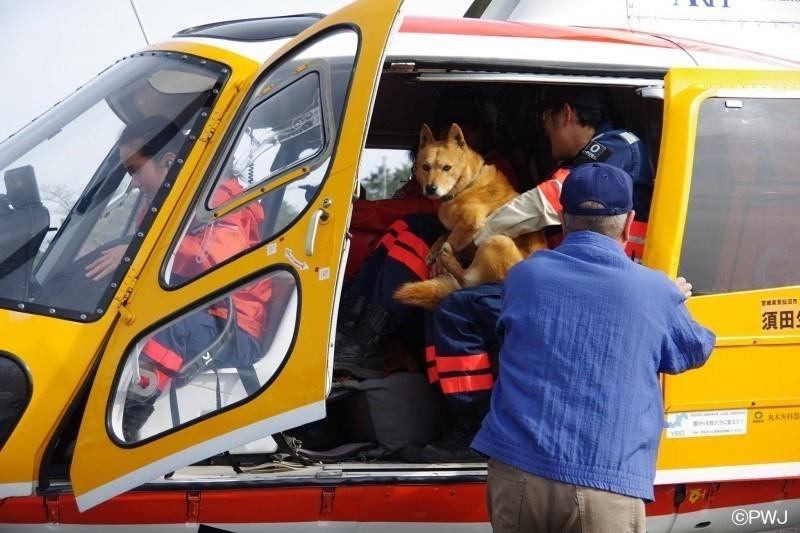 Salvaron a este cachorrito porque la perrera estaba demasiado ocupada 07