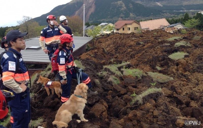 Salvaron a este cachorrito porque la perrera estaba demasiado ocupada 09