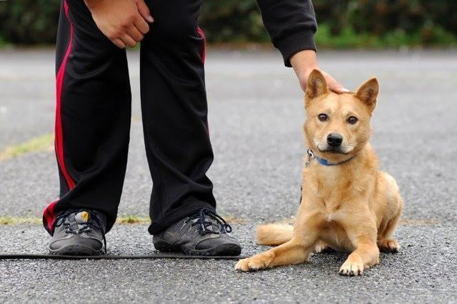 Salvaron a este cachorrito porque la perrera estaba demasiado ocupada 10
