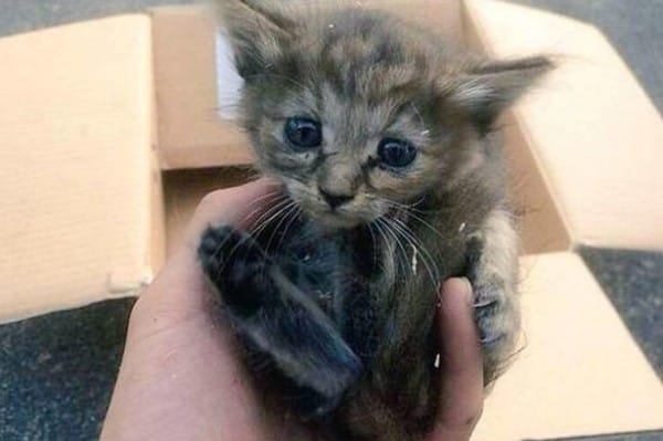 Un gato abandonado es adoptado por una familia de hurones