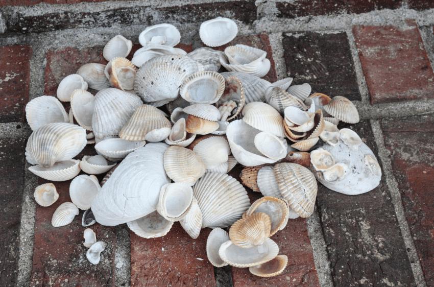 Se llevo a casa toneladas de conchas Pero ahora mira lo que hace con ellas 01