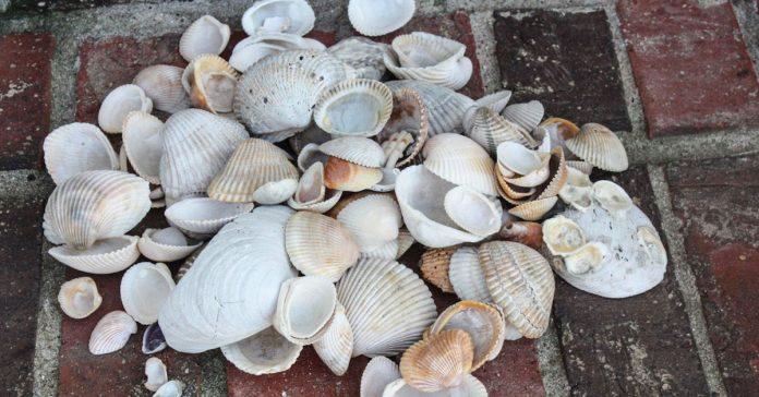 Se llevo a casa toneladas de conchas Pero ahora mira lo que hace con ellas banner