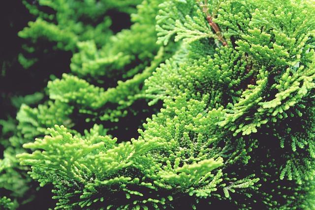 Cypress photo