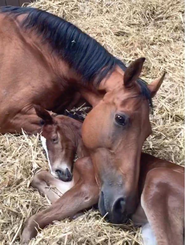 Este bebé se quedó huérfano al nacer. Pero entonces ELLA se tumbó junto a él...