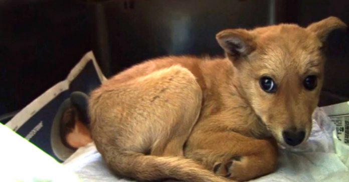 yumenosuke perro rescate salvado perrera banner