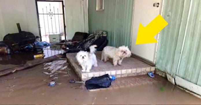 Rescatan mascotas abandonadas durante las inundaciones