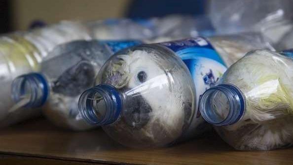 Cacatúas en el interior de botellas se venden en el mercado negro por 900€