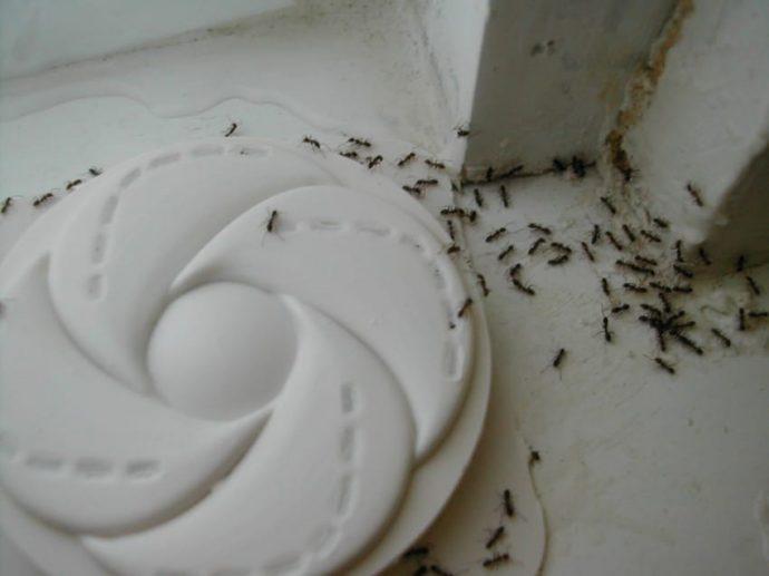 2 Ingredientes para deshacerte de las Hormigas de tu casa en unos minutos