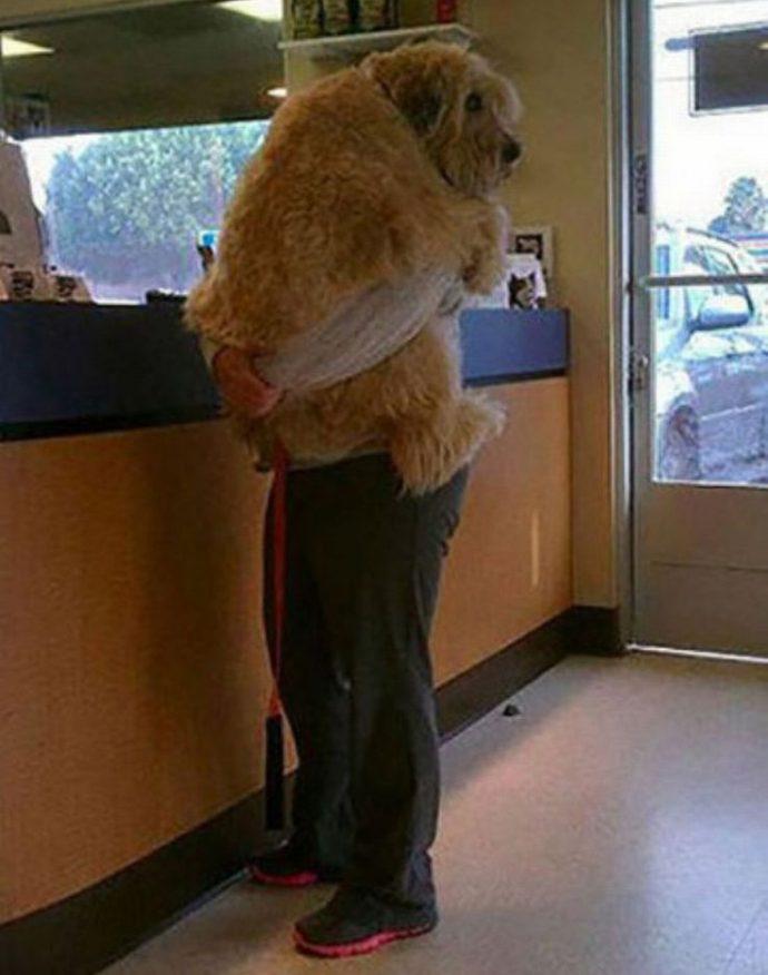 12 Divertidas mascotas y sus cómicas reacciones al averiguar que las llevaban al veterinario