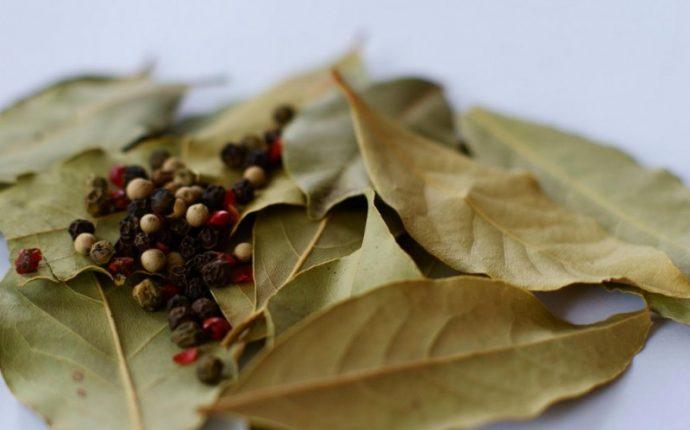 sabias que las hojas de laurel tienen estos beneficios relajantes 1467576656