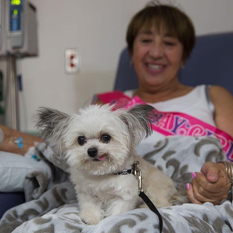 A este cachorro le dieron un premio. Pero espera a ver su reacción cuando descubre que va a recibir otro
