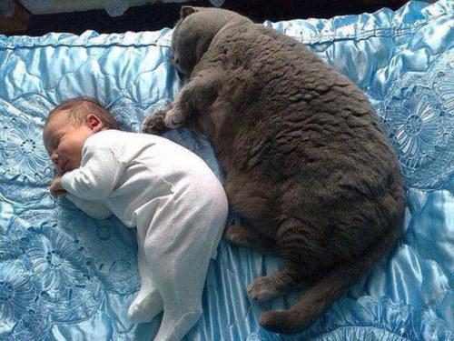 19 Divertidas imágenes de Gatos rellenitos que te cambiarán el día