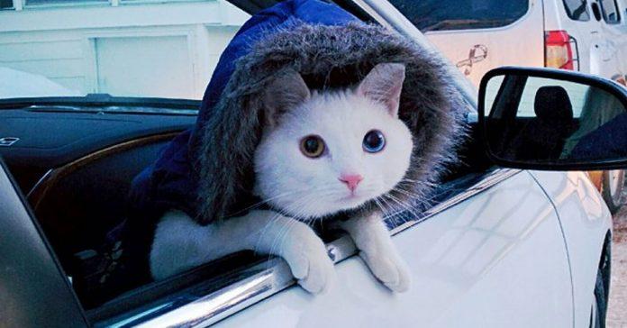 21 Pobres gatos que no son conscientes de lo que realmente estan haciendo banner
