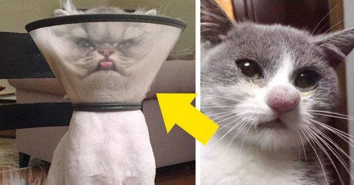 21 gatos que ya no funcionan como gatos