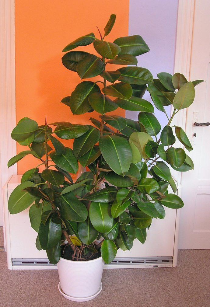 9 Plantas para tener en el interior de tu hogar y purificar el aire