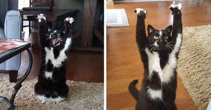 Este curioso gato tiene una costumbre muy particular que se ha vuelto viral banner