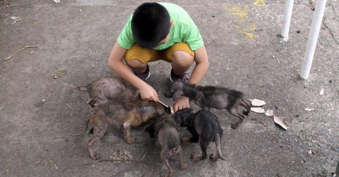 Este niño encontro a estas ratas grandes detras de una iglesia y un año despues no parecian las mismas banner
