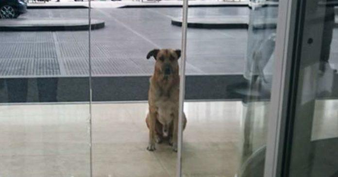 Este perro siempre esperaba fielmente fuera del hotel a la Asistenta de vuelo banner