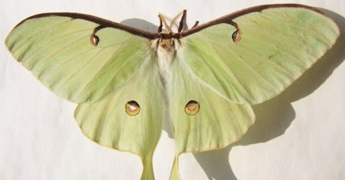 Mariposa nocturna banner