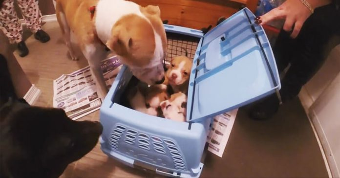 Reunieron a una madre desolada con sus cachorros perdidos banner